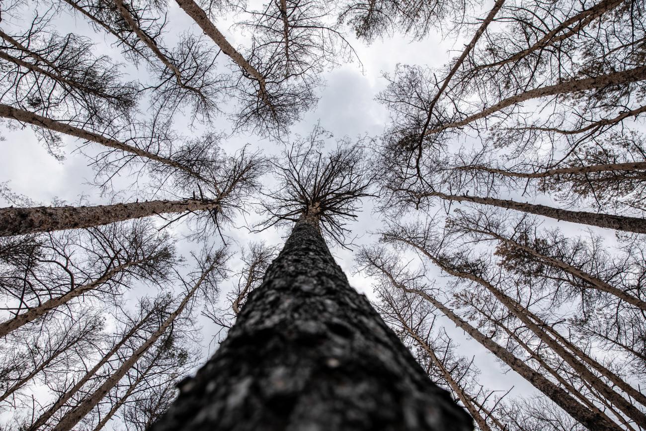 szén-dioxid-kor a fák társkereső srác két hónapig