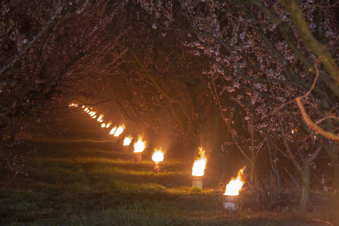 Balatonvilágos, 2020. március 31. Kajszibarackfákat melegítenek tüzekkel a fagy ellen védekezve egy Balatonvilágos közelében fekvő gyümölcsösben 2020. március 31-én. MTI/Varga György