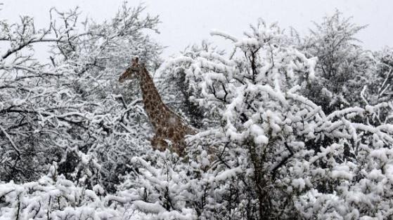 Hihetetlen látvány - havazik Afrikában